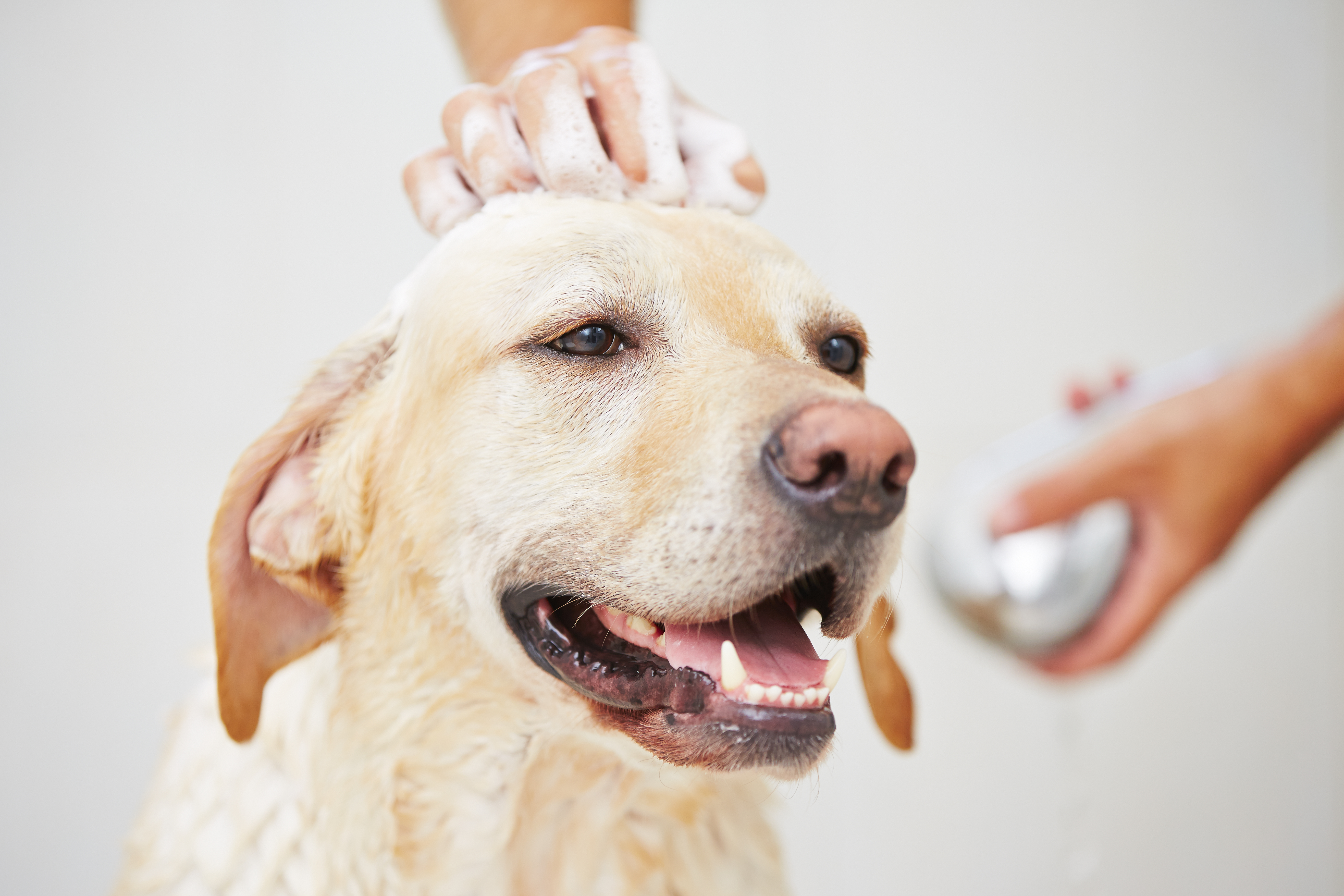 Basic Dog Grooming Tips
